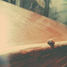 ladybug in church