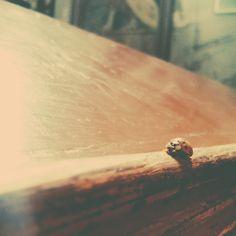 ladybug in church