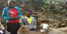 Bizunesh Abulla och Tagesech Gagiye  är två av de många kvinnor som fått hjälp att driva eget jordbruk genom stöd från organsiationen KMG Et...