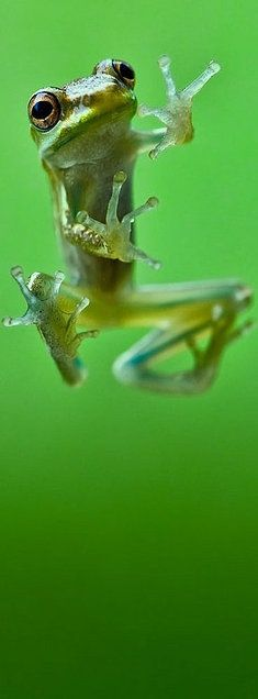 »✿❤Love Frogs❤✿« Froggy