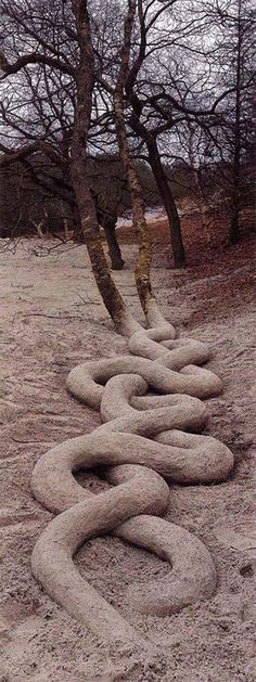Incredible serpentine tree roots by Andy Goldsworthy. Andy Goldsworthy is a… Land Art, Bonsai, Planter Rosier, Art Environnemental, Art Et Nature, Nature Artwork, Weird Trees, Site Art, Unique Trees