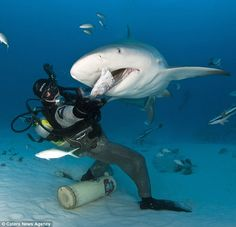 Fearless diver photographed feeding bull sharks in Playa del Carmen!
