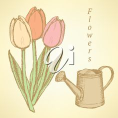 Sketch tulip and watering can, vector vintage background