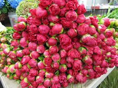 A mountain of #peonies at www.brannanst.com