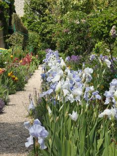 Monet's Garden at Giverny, France. Claude Monet (1840-1926).