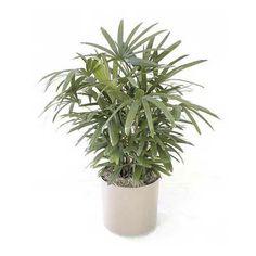 43 Best Hospital Plants Images Houseplants Air Plants