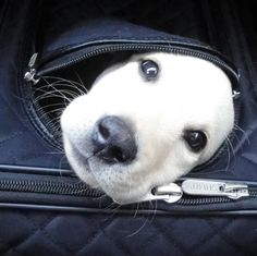 Take me with you please....I fit!