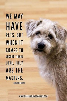 Dog Quote - We may have pets.... Dog, Dog Quotes Inspirational Quotes, Funny Quotes, Life Quotes