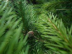 Csigaház Herbs, Nature, Naturaleza, Herb, Nature Illustration, Off Grid, Natural, Medicinal Plants