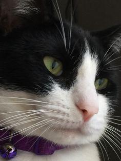 Isabel's City Cat