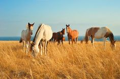 Beautiful horses by joyt on @creativemarket