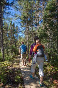 Cet automne, parcourez les montagnes gaspésiennes! Vivez les monts Chic-Chocs dans toute leur splendeur, avec 25 sommets de plus de 1000 mètres. Photo : CHOK Images. Chic Choc, Excursion, Kayak, Bradley Mountain, Photos, Images, Children Playground, Mountains, Bag