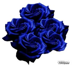 Stock photo blaue Rosen by 1989juni on DeviantArt