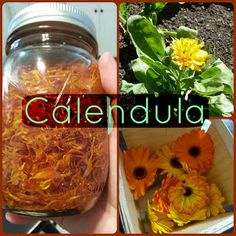 Calendula – From Seed to Soap
