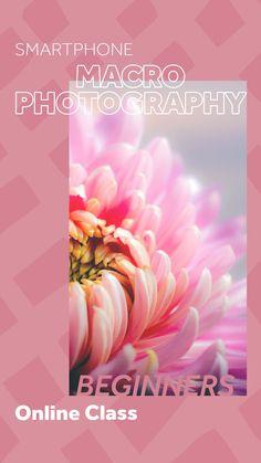 Learn how to take amazing macro photos with your smartphone! #macrophotography #macrophoto #macronature #photographyforbeginners #photographyclass #learnmacro #onlineclass #photographyclass #skillshare #photography #learnonline #skillshareteacher