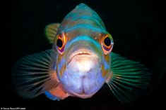 Underwater Photographer of the Year 2020 winners named | Daily Mail Online