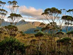 Six-day hike through Tasmania--On the Overland Track through Pinestone Valley, one can see Cathedral Mountain through a eucalypt forest. Pine Valley, Little Island, Day Hike, Tasmania, Adventure Travel, Places To See, National Parks, Scenery, Hiking