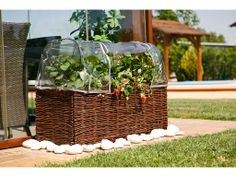 Catral Garden, specialist in garden, cultivation and decoration Exterior, Kit, Home Decor, Planting Flowers, Small Vegetable Gardens, Flowering Plants, Vegetables, Urban, Decoration Home
