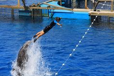 The Dolphinarium is a large pool area within the Oceanografic in Valencia. Regular shows entertain all ages.