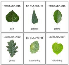 Eigenschappen van bladeren wandplaat - De juffrouw zegt Flora, Biology Teacher, Plant Therapy, Old Trees, Autumn Forest, Nature Journal, School Themes, Montessori, Coloring Pages