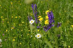 Dni sa predlžujú a všetko živé, čo rastie zo zeme, naberá na sile, ktorej veľmi pomáha aj slniečko. Toto obdobie je ideálnym časom na zber liečivých bylín.