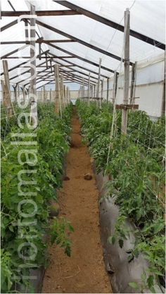 Trellis, The Expanse, Farmer, Plants, Green Houses, Growing Up, Farmers, Plant, Planets
