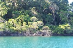 Mangroves of Andaman River, Outdoor, Outdoors, Outdoor Games, The Great Outdoors, Rivers