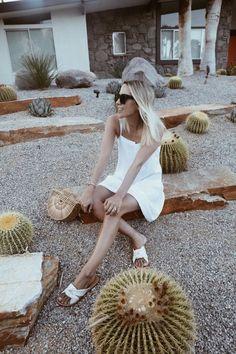 Palm Springs Diary