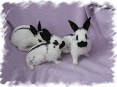 English Spot Rabbits- The line on the back means purebred. Cute or what? Grey Bunny, Cute Bunny, Bunny Bunny, Bunny Rabbits, English Spot Rabbit, House Rabbit Society, Baby Animals, Cute Animals, Bunny Care