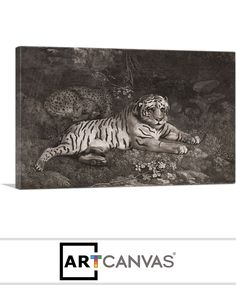 Ready-to-hang A Tiger and a Sleeping Leopard 1788 Canvas Art Print for Sale canvas art print for sale. Art Prints For Sale, Canvas Art Prints, Lion Sculpture, Sleep, Statue, Sculptures, Sculpture