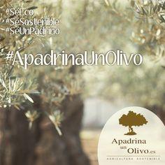 ℹ️ Conoce nuestro proyecto 𝓐𝓹𝓪𝓭𝓻𝓲𝓷𝓪𝓤𝓷𝓞𝓵𝓲𝓿𝓸.𝓮𝓼ℹ️ Es una nueva vía Sostenible ♻️, Saludable 🏃♂️ y Solidaria🎗 , para adquirir tus alimentos: 1️⃣ Al adoptar tu olivo, recibes su aceite ecológico fresco cultivados para ti, directo desde olivar.   2️⃣ Ayudas al agricultor a subsistir y conservar esta biodiversidad en armonía en el Parque Natural de la Subbética (Córdoba) #SéEco #SéSostenible #SéUnPadrino #ApadrinaUnOlivo #AOVEEco #Ecologico Fresco, Movie Posters, Sustainable Farming, Farmer, Olive Tree, Natural Playgrounds, Olive Oil, Growing Up, Healthy
