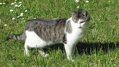 Rothenblog: Nachbarkatze beim Rundgang