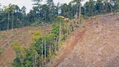 Queensland is one of the worlds worst places for deforestation
