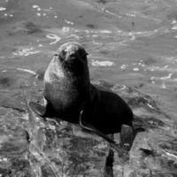 Ministry of Environment of Angola: Stop the killing of seals in Namibia Ministério do Ambiente de Angola: Parem com o abate de Focas no Namibe.