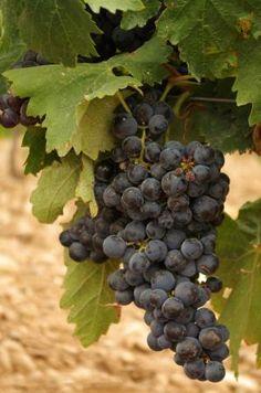 Photo of Jornada enoturismo Riojatrek, Rioja wine tours