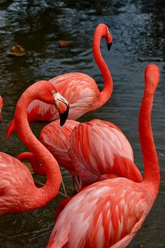 A woman of Noble character, who can find? She is far more precious than rubies Tier Wallpaper, Flamingo Wallpaper, Ocean Wallpaper, Flamingo Art, Summer Wallpaper, Animal Wallpaper, Aesthetic Iphone Wallpaper, Nature Wallpaper, Aesthetic Wallpapers