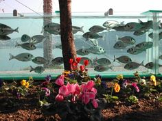 This is incredible >>> Man makes an entire fence into an aquarium and has sea water pumped into it 35 times a day - it surrounds his property. Amazing!