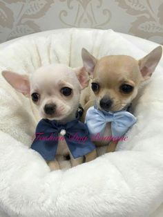 Always keep your pet Delighted & Healthy Win a $1000 Gift Card - 100% FREE Pet Meals for 12 months!   Check the LINK  http://DogsDogsBaby.us/GiftCard