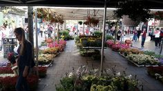 Dutch Flowers on Tour...Market Place returns to Sauchihall Street for another 5 day Continental Market in Glasgow! This huge Global Market is home to a number of fantastic traders representing countries from all over the world, it is ot to be missed!  Wednesday 22nd - Sunday 26th April 2015