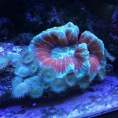 Some brain game for your mornin.  #nofilter #iphone5s #coral #reeftank #coralreeftank #reeftanksofvine #reef #reefpack #reef2reef #reefcandy #reefersdaily #reefrEVOLution #saltwatertanks #shallowreeftank #aquariums #aquariumphotography #coralreef #coraladdict #reefaholiks #reefjunkie #livetanks #reeflife #instareef #reefgeek #allmymoneygoestocoral #instareef #tankwars #reefpackworldwide #instafish