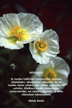 Kiitollisuus unikot Kiitollisuus Real Life Quotes, Live Life, Words, Gratitude, Flowers, Plants, Mindfulness, People, Be Grateful