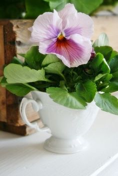 seasonalwonderment: Pansy in a China Cup