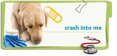 Learn to recognize signs of head trauma in pets with this Petplan pet insurance pet health tip.