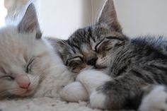 Sleeping kitties.