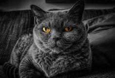 Yellow eyes, cat, star, pet animal wallpaper