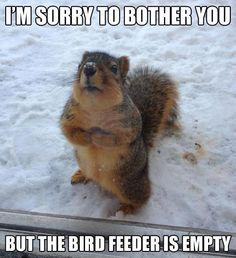 ohh.... i would give him his own feeder :) so cute!