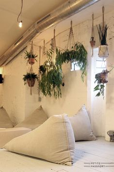 CT Coffee & Coconuts Amsterdam by Petite Passport