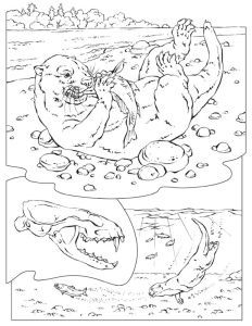 River Otter Coloring Pages Sea With A Fish