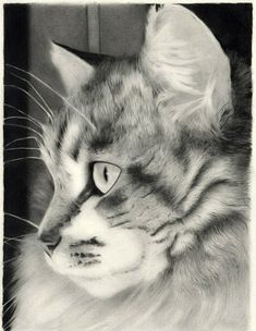 Pencil drawing http://www.pinterest.com/freemcr/drawing/