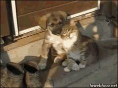 Awwwww Cat Loves Dog http://ift.tt/2ewy7MZ